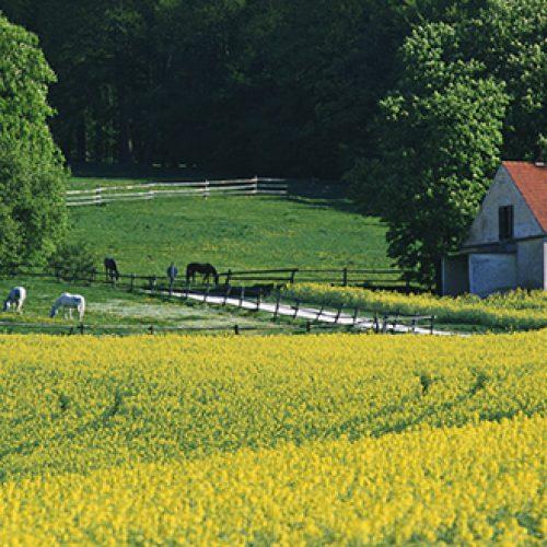 Najmilsze wspomnienia związane z latem to wakacje spędzane u babci na wsi