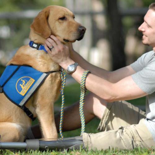 Posiadanie psa jest jedną z największych życiowych przyjemności