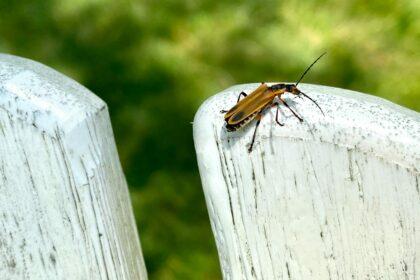 Robaki w domu? Domowe sposoby na pozbycie się robaków z domu